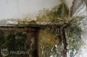 How Mould Hides and Thrives