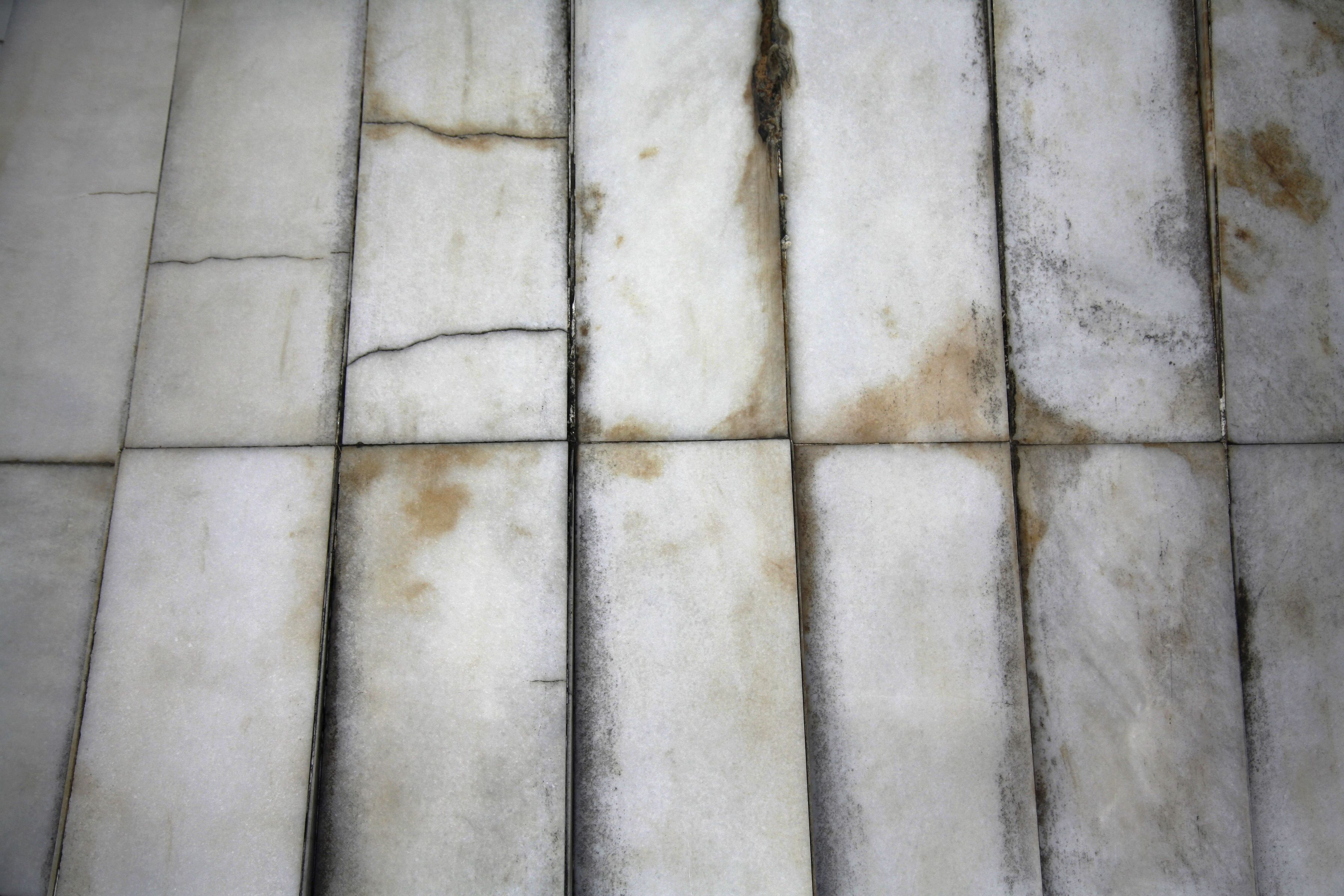The Top Causes of Mould Damage